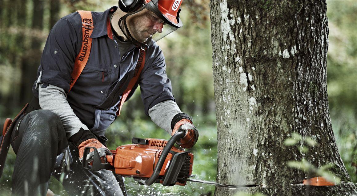 6 βήματα για πετυχημένη κοπή δέντρων