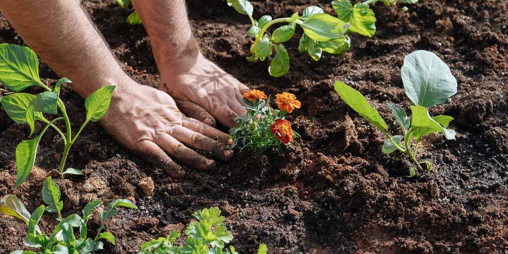 Απρίλιος, εργασίες στον κήπο!!!