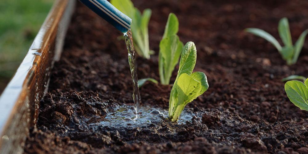 5 μυστικά για σωστό πότισμα και υγιή φυτά..