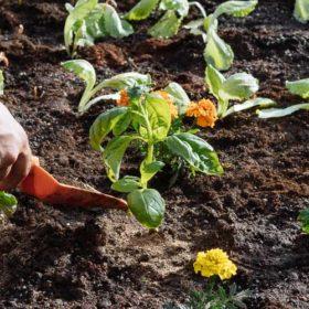 Μάιος, εργασίες στον κήπο